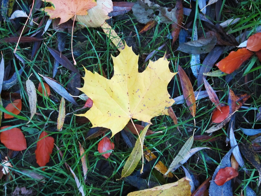 Jak polubić listopad-jesienny liść