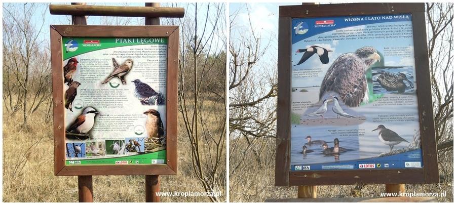 Rezerwat Mewia Łacha Gdańsk Sobieszewo Świbno tablice informacyjne ptaki