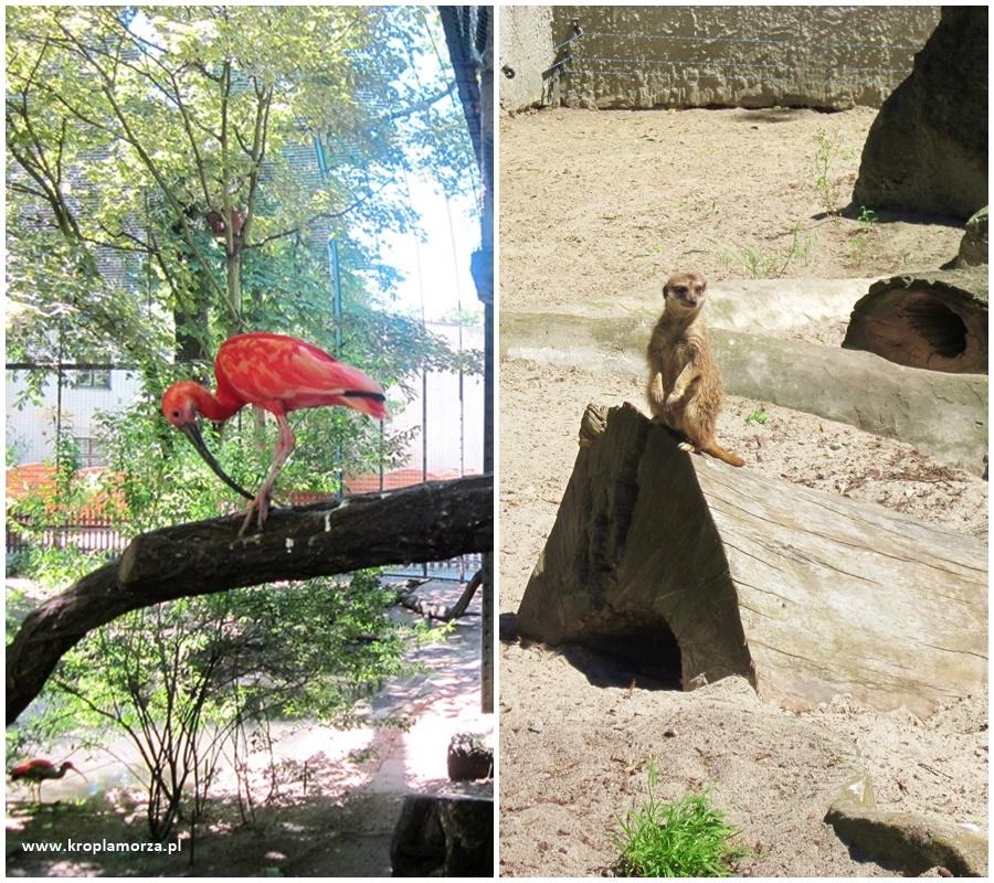 Stare zoo wPoznaniu