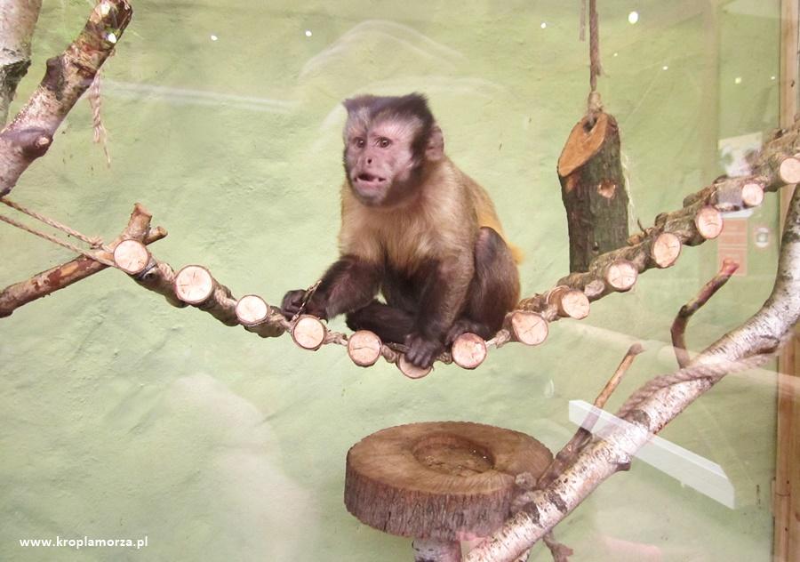 Atrakcje dla dzieci wPoznaniu Stare Zoo wPoznaniu