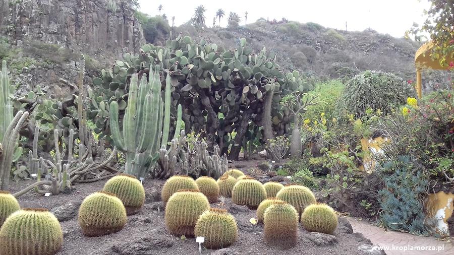 Gran Canaria - Jardin Canario