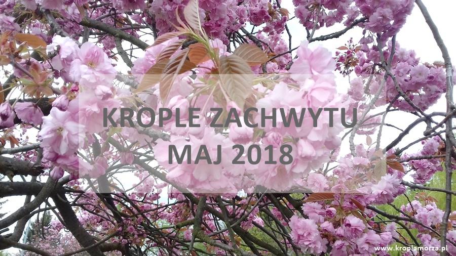 podsumowanie-miesiaca-maj-2018