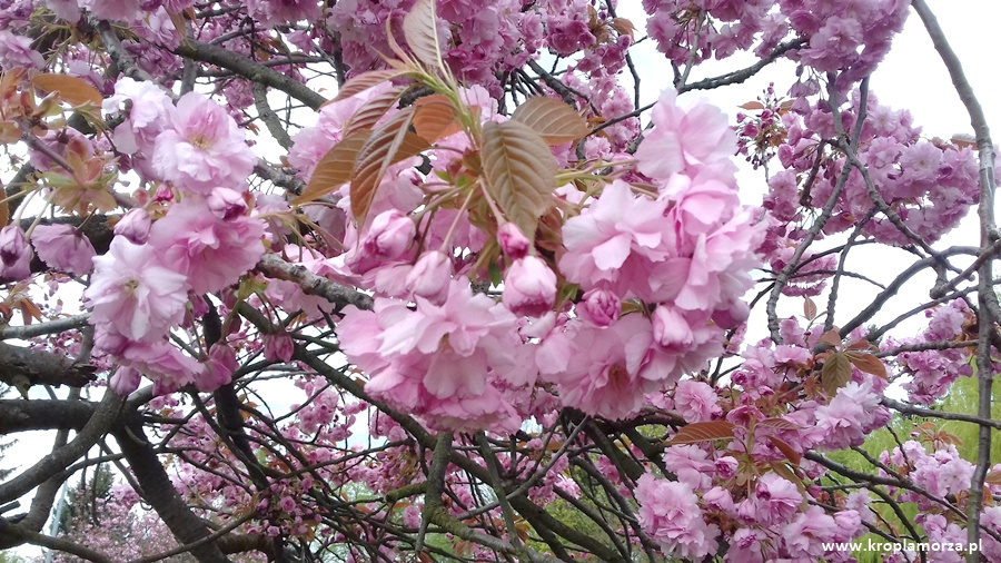 podsumowanie-miesiaca-maj-wiosna-kwiaty