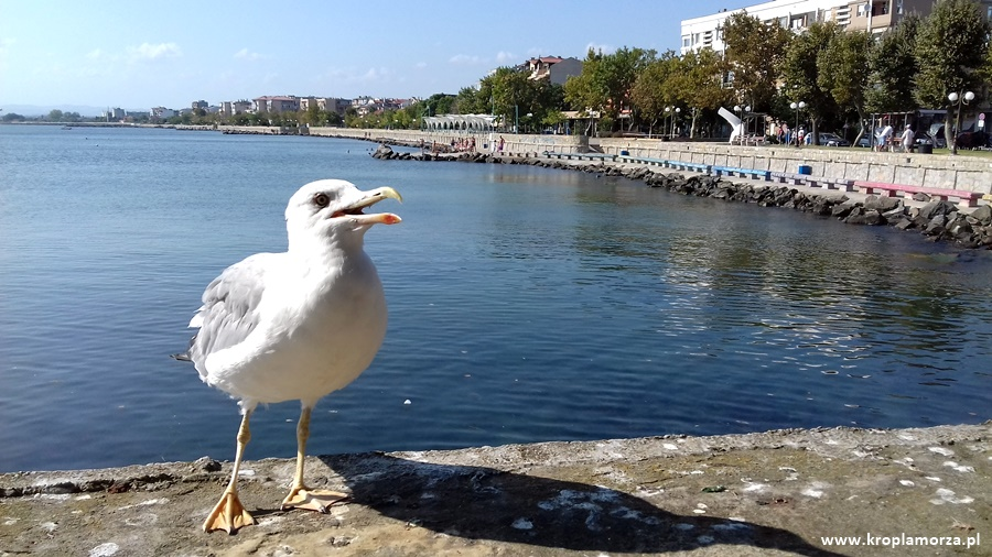 pomorie-urlop-bulgaria