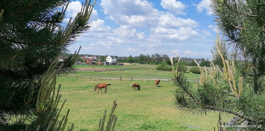 Sominy konie