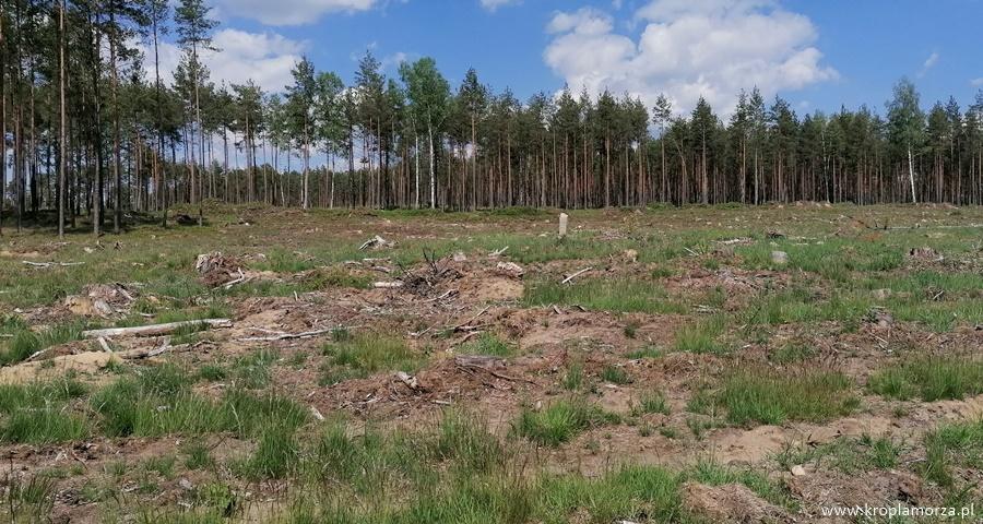 lasy nakaszubach